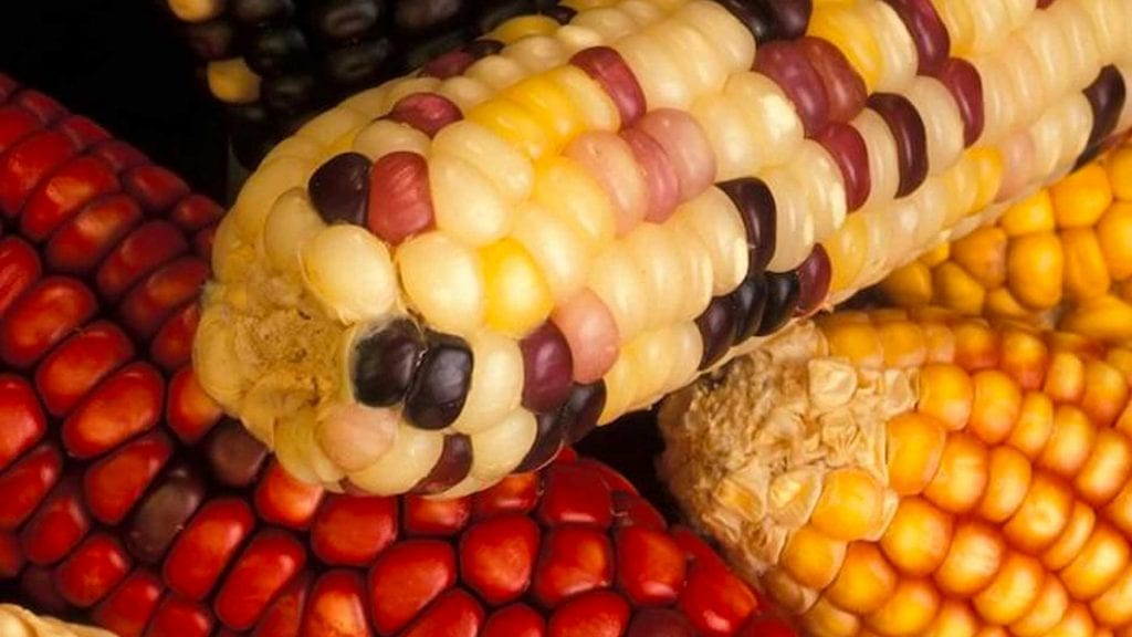 Autism and GMO's: The Missing Link